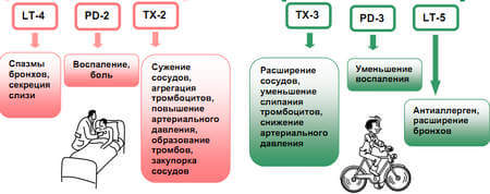 действие омега-3 и омега-6 в организме